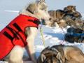 冬用犬の服/防寒用ドッグコート|MANMAT サーモコート 中型犬~大型犬におすすめ|犬グッズ通販HAU