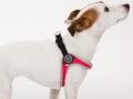 着けやすいおすすめイタリア製小型犬用ハーネス|Fibbia Tre Ponti トレ・ポンティ|犬グッズ通販HAU