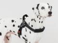 中型犬・大型犬用ハーネス Brio ブリオ Tre Ponti トレ・ポンティ|着脱簡単で脇が擦れにくいイタリア製ハーネス|犬グッズ通販HAU