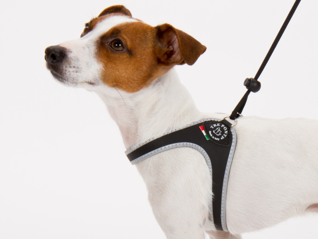 サイズ調整簡単なおすすめイタリア製小型犬用ハーネス|Liberta Tre Ponti トレ・ポンティ|犬グッズ通販HAU
