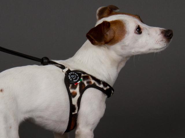 イタリア製小型犬用ハーネス(おしゃれ&かわいい)|アニマルファー  トレ・ポンティ|犬グッズ通販HAU