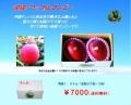 mango260(秀品1.0kg)