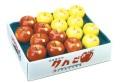 <フルーツ王国 余市>極上りんご ふじ・王林セット 箱入5kg 16〜20玉入り