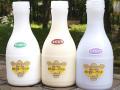 十勝ジャージーミルク 飲むヨーグルト 500ml 3本セット(オリゴ糖・きび糖・ハスカップ)