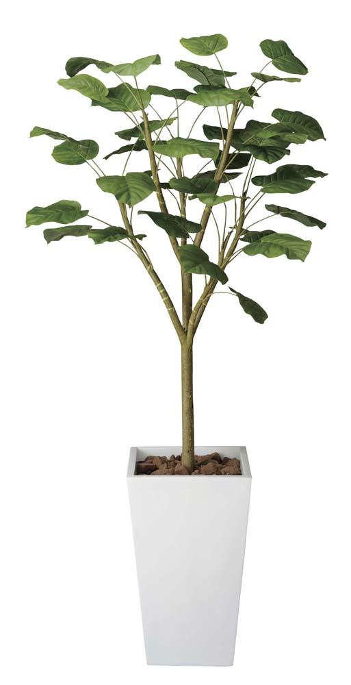 光触媒 光の楽園 ウンベラータダブル 高さ 1.8m 【インテリアグリーン 大型 人工観葉植物】 (118g750)