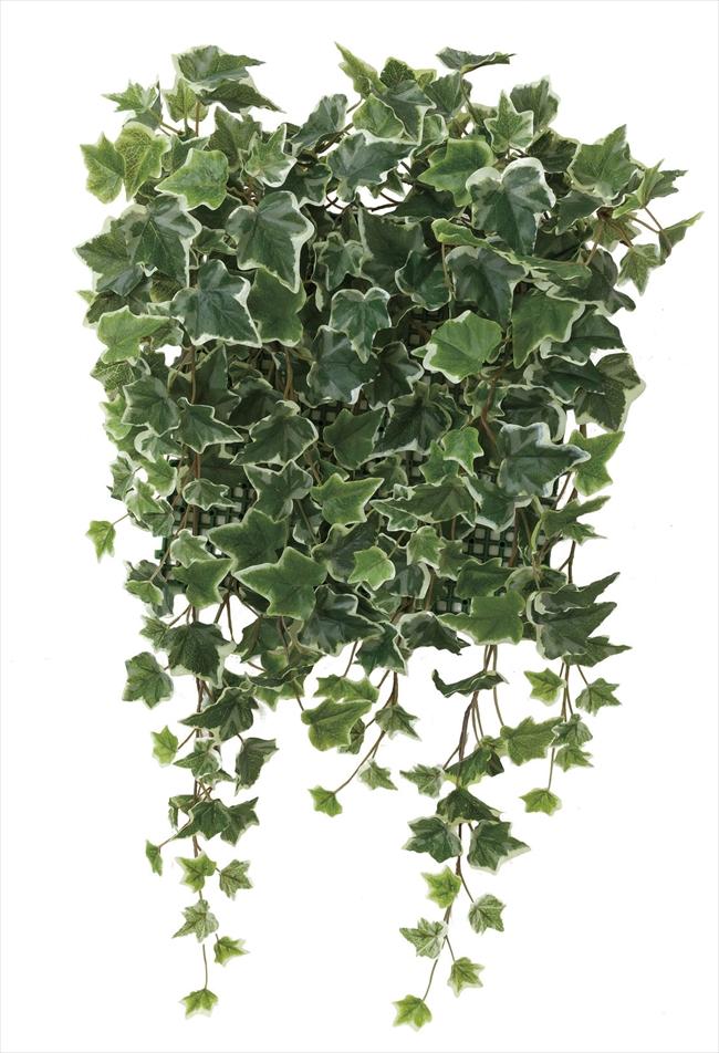 光触媒 光の楽園壁面緑化斑入アイビー【インテリアグリーン 人工観葉植物】(441c70)