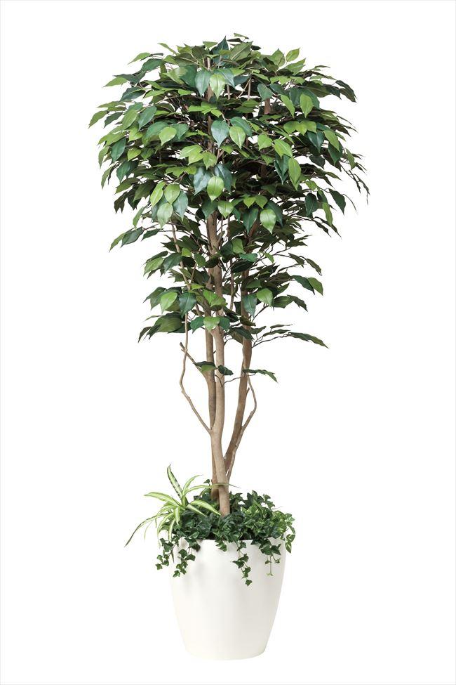 光触媒 光の楽園フィカスベンジャミン(植栽付) 高さ 1.8m【インテリアグリーン 大型 人工観葉植物】(508f500)