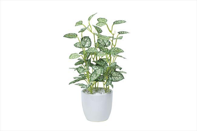 光触媒 光の楽園ミニピポエスタポット【インテリアグリーン 人工観葉植物】(525a25)