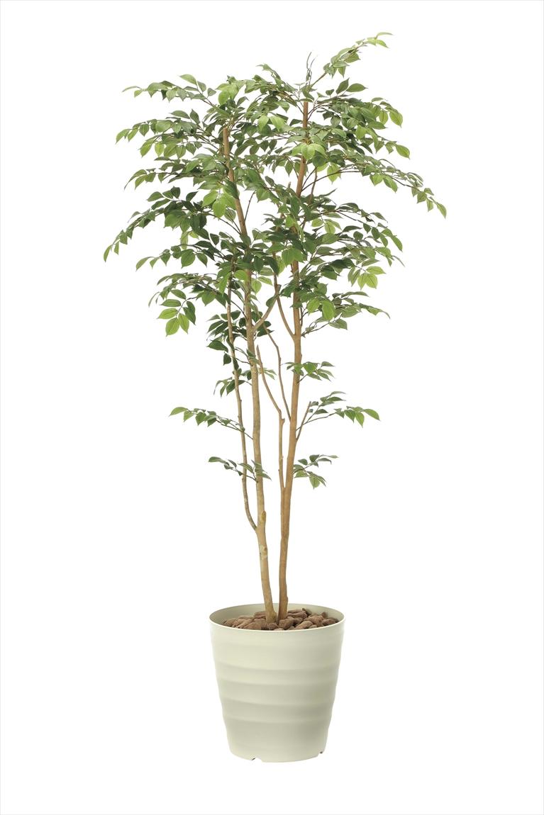光触媒 光の楽園マウンテンアッシュ 高さ 1.8m【インテリアグリーン 大型 人工観葉植物】(900a360)