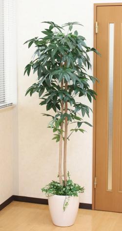 光触媒 光の楽園パキラ(下草付) 高さ 1.8m【インテリアグリーン 大型 人工観葉植物】(acn088)