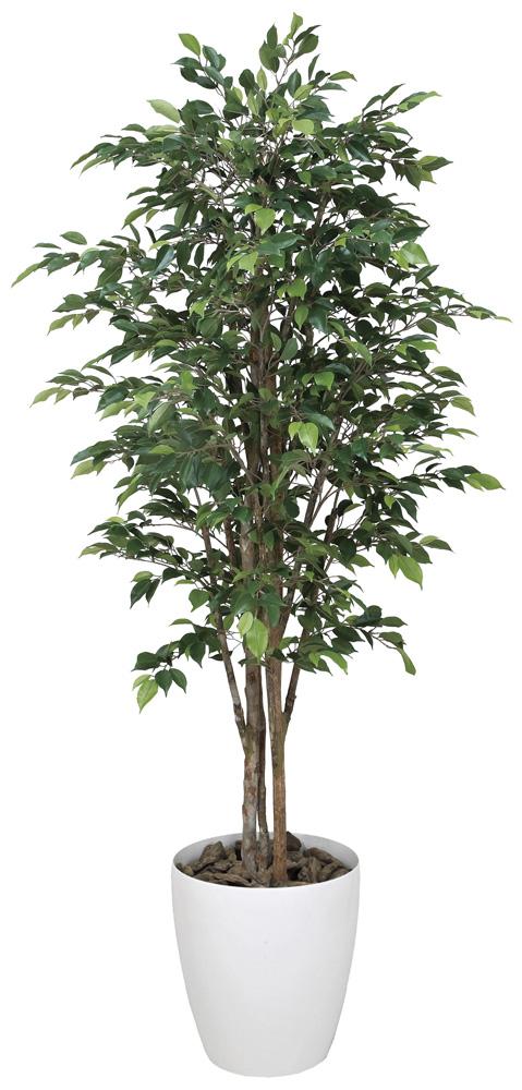 光触媒 光の楽園 ロイヤルベンジャミン 高さ 1.8m 【インテリアグリーン 大型 人工観葉植物】 (151g600)