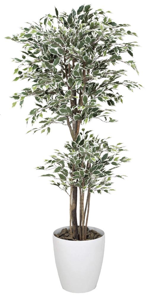 光触媒 光の楽園 トロピカルベンジャミン斑入り 高さ 1.6m 【インテリアグリーン 大型 人工観葉植物】 (166g450)