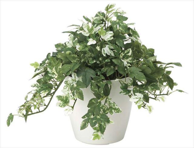 光触媒 光の楽園 アンペロシスアイビー 【インテリアグリーン 人工観葉植物】 (2037a60)