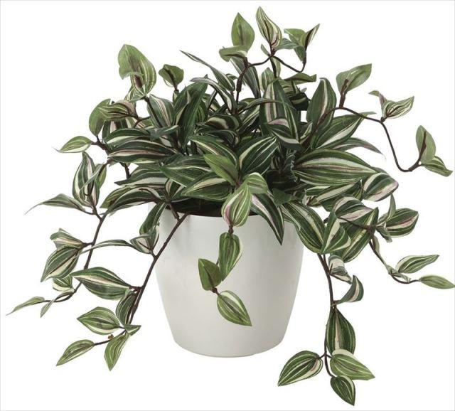 光触媒 光の楽園 トラディスカンティア 【インテリアグリーン 人工観葉植物】 (2042a50)