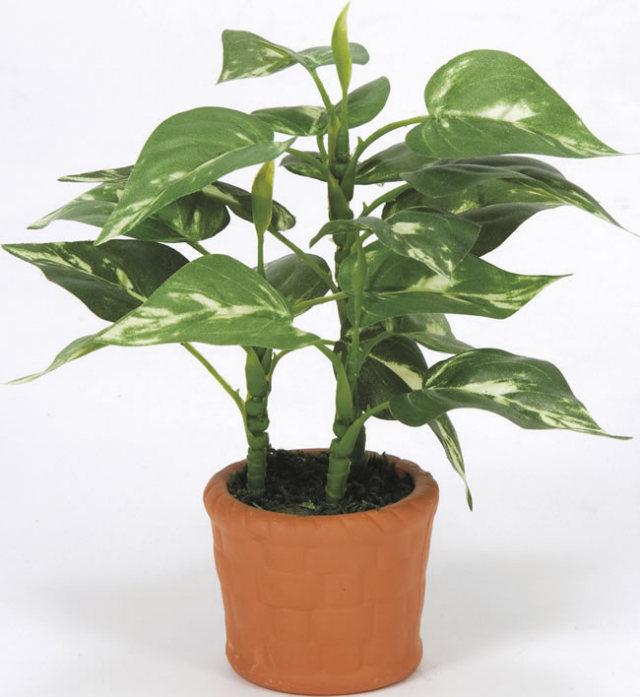 光触媒 光の楽園カントリーポトス【インテリアグリーン 人工観葉植物】(263a10)