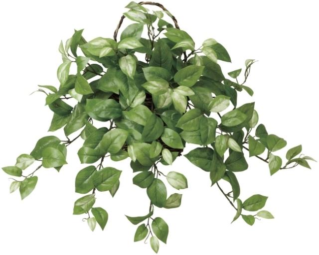 光触媒 光の楽園壁掛ホヤ【インテリアグリーン 人工観葉植物】(268a60)