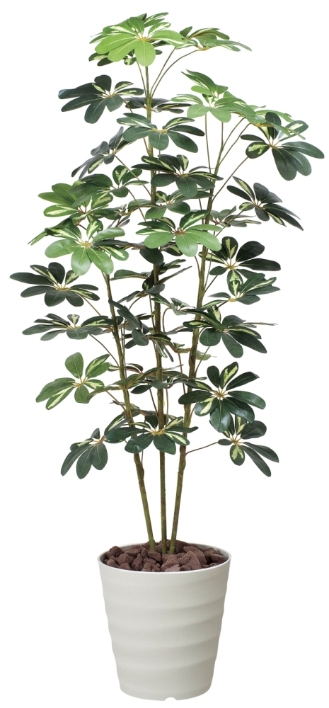 光触媒 光の楽園カポック斑入り 高さ 1.5m【インテリアグリーン 大型 人工観葉植物】(355a200)