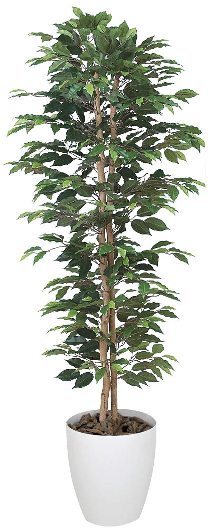 光触媒 光の楽園ベンジャミンスリム 高さ 1.6m【インテリアグリーン 大型 人工観葉植物】(356a280)