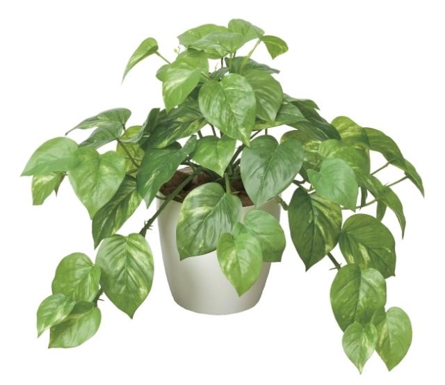 光触媒 光の楽園フレッシュポトス【インテリアグリーン 人工観葉植物】(384a50)