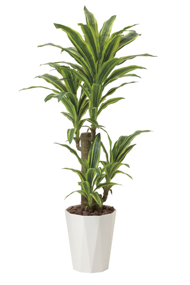 光触媒 光の楽園 フレッシュドラセナ 高さ 1.25m 【インテリアグリーン 人工観葉植物】 (428g250)