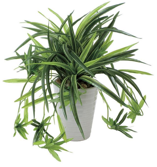 光触媒 光の楽園ドラセナ丸ポット【インテリアグリーン 人工観葉植物】(439a60)