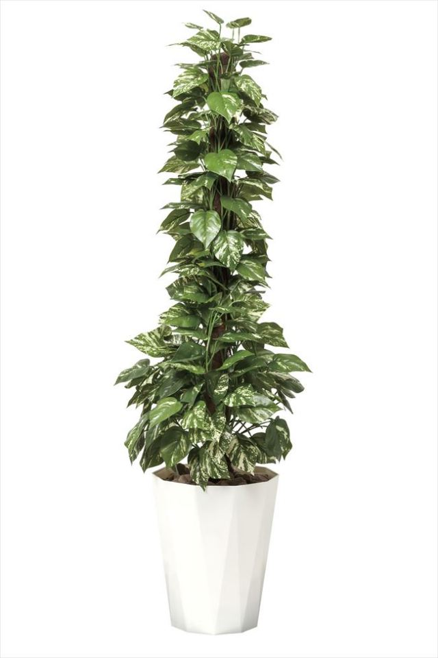 光触媒 光の楽園ポトス 高さ 1.5m【インテリアグリーン 大型 人工観葉植物】(509a300)