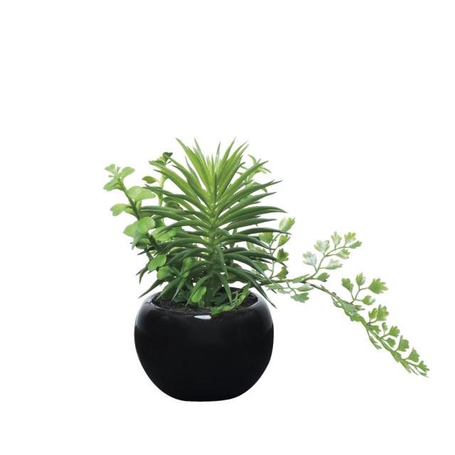 光触媒 光の楽園ミックスインポット【インテリアグリーン 人工観葉植物】(522a25)