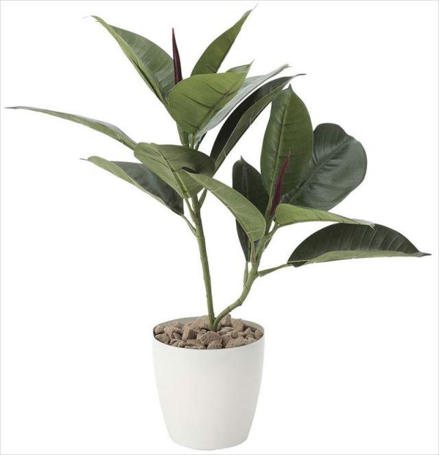 光触媒 光の楽園 ゴムの木 【インテリアグリーン 人工観葉植物】 (637g50)