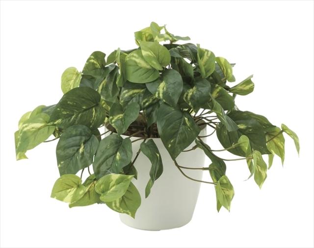 光触媒 光の楽園フレッシュポトス【インテリアグリーン 人工観葉植物】(641a50)