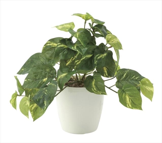 光触媒 光の楽園フレッシュポトスS【インテリアグリーン 人工観葉植物】(642a35)