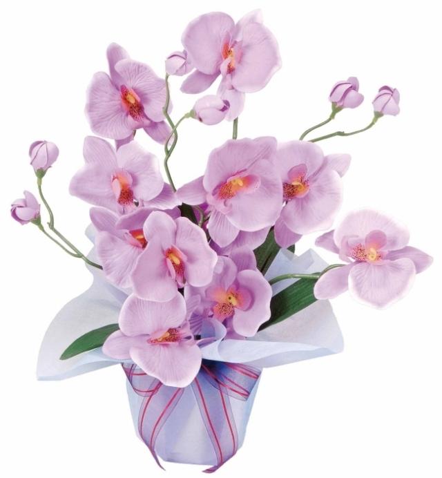 光触媒 光の楽園ホットファレノ【アートフラワー 造花 】(68a25)