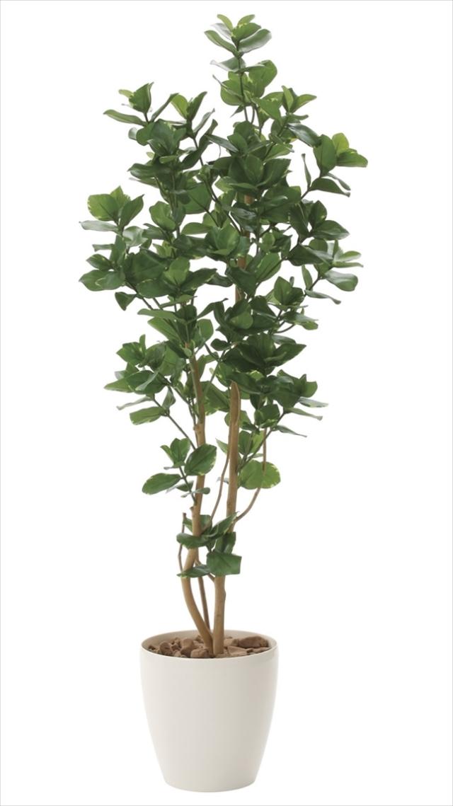 光触媒 光の楽園クルシア 高さ 1.6m【インテリアグリーン 大型 人工観葉植物】(719a360)