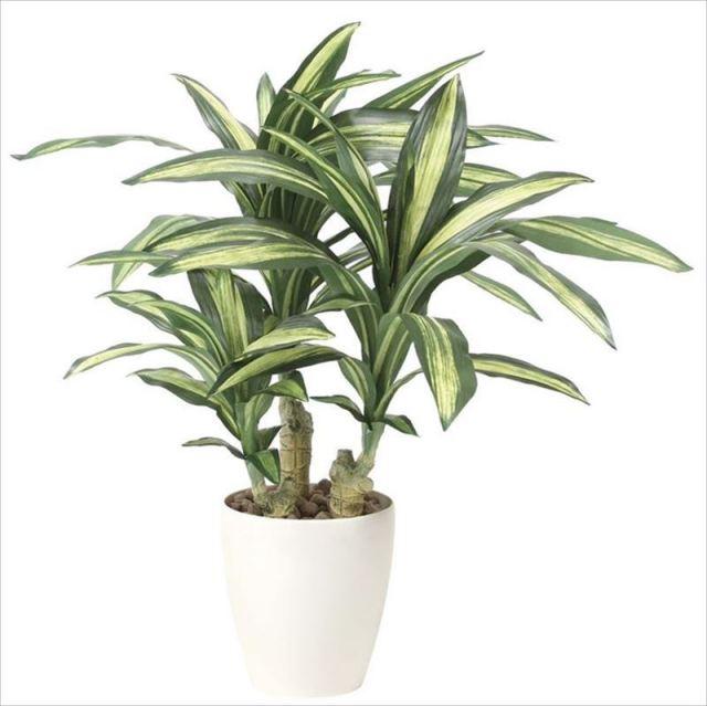 光触媒 光の楽園 幸福の木S 【インテリアグリーン 人工観葉植物】 (829g120)