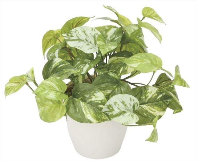 光触媒 光の楽園 マーブルポトス 【インテリアグリーン 人工観葉植物】 (836g35)