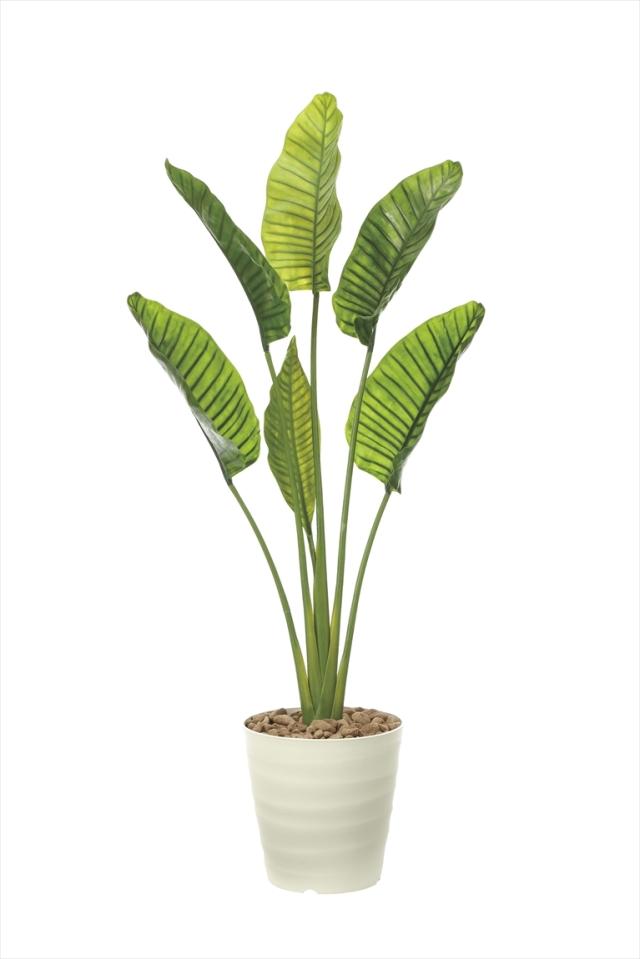 <光触媒加工なし>光の楽園オーガスタL 高さ 1.8m【インテリアグリーン 大型 人工観葉植物】(902a360)