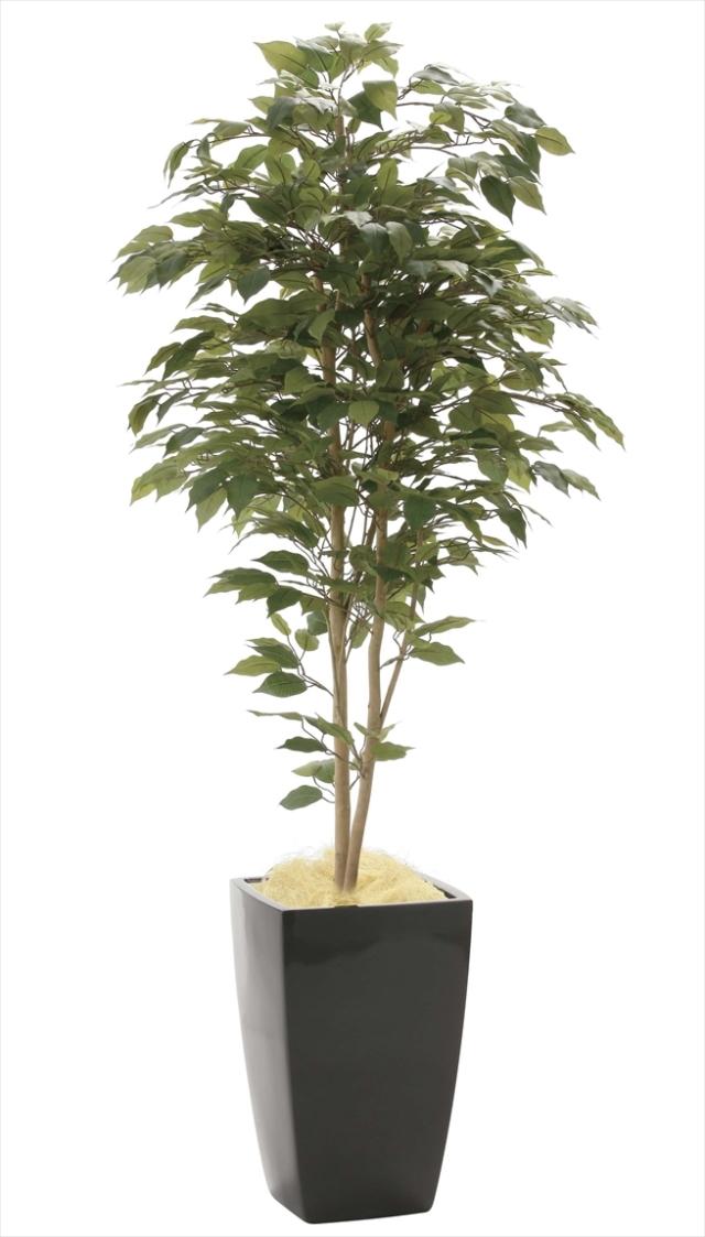 光触媒 光の楽園アーバンベンジャミン 高さ 1.8m【インテリアグリーン 大型 人工観葉植物】(946a600)