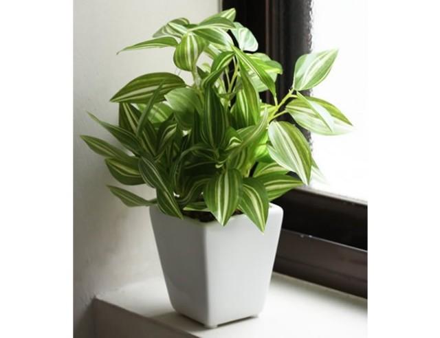光触媒 光の楽園ミニグリ-ン ワンダリング【インテリアグリーン 人工観葉植物】(acn033)