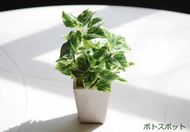 光触媒 光の楽園ミニグリ-ン ポトス【アートフラワー 造花 】(acn035)