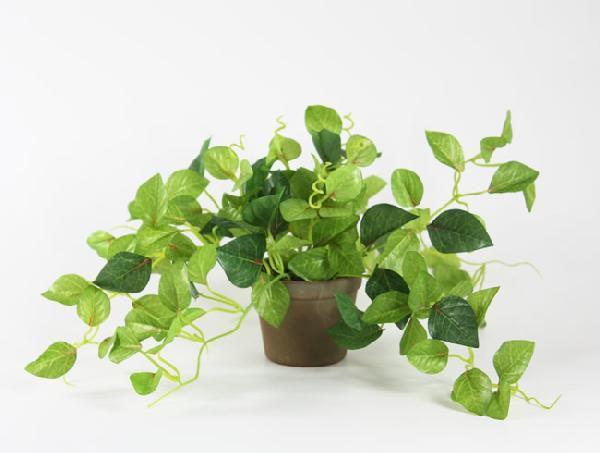 光触媒 光の楽園チャーリーポット【インテリアグリーン 人工観葉植物】(acn055)