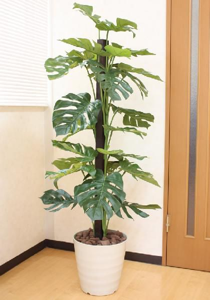 光触媒 光の楽園モンステラ 高さ 1.5m【インテリアグリーン 大型 人工観葉植物】(acn076)
