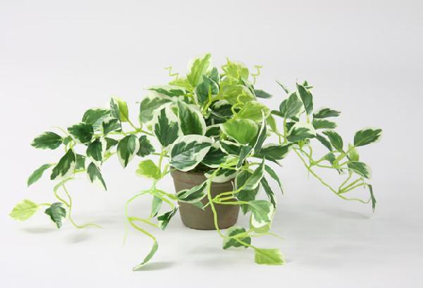 光触媒 光の楽園ペペロミアポット【インテリアグリーン 人工観葉植物】(acn090)