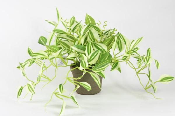 光触媒 光の楽園ワンダリングポット【インテリアグリーン 人工観葉植物】(acn104)