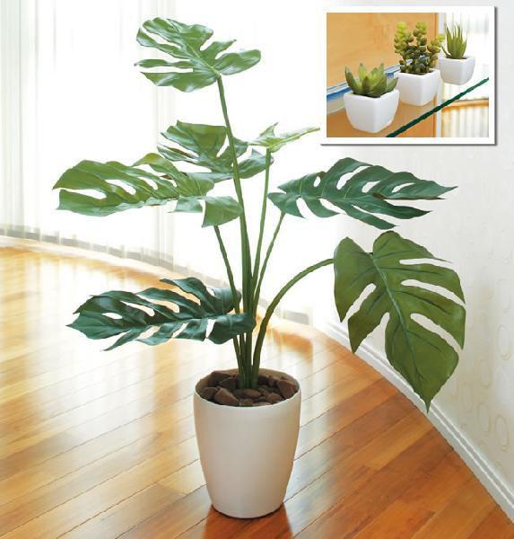 光触媒 光の楽園モンステラ75+多肉植物 3個セット【インテリアグリーン 人工観葉植物】(acn132)