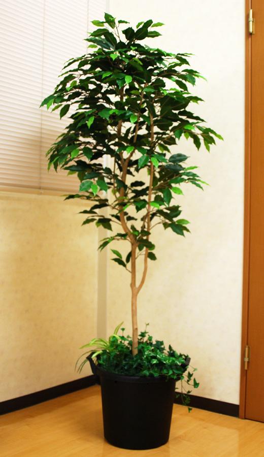 光触媒 光の楽園 ベンジャミン 高さ 1.6m【インテリアグリーン 大型 人工観葉植物】(acn176)