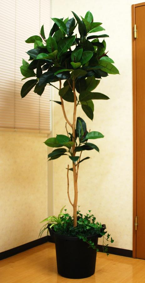 光触媒 光の楽園 ゴムの木 高さ 1.8m【インテリアグリーン 大型 人工観葉植物】(acn179)