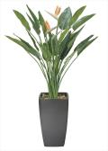 光触媒 光の楽園アートストレチア花付 高さ 1.8m【インテリアグリーン 大型 人工観葉植物】(116e1000)