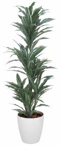 光触媒 光の楽園ワーネッキー 1.8m【インテリアグリーン 人工観葉植物】(147a300)