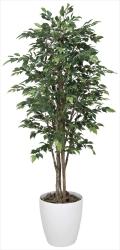 光触媒 光の楽園ロイヤルベンジャミン 1.6m【インテリアグリーン 人工観葉植物】(150c500)