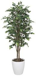 光触媒 光の楽園 ロイヤルベンジャミン 高さ 1.6m 【インテリアグリーン 人工観葉植物】 (150g520)