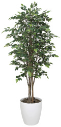 光触媒 光の楽園 ロイヤルベンジャミン 高さ 1.8m 【インテリアグリーン 人工観葉植物】 (151g600)